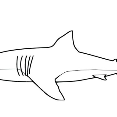 Shark Colouring In
